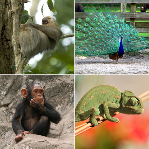 image of various animals